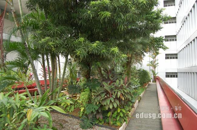 新加坡莱佛士高等教育学院热门专业
