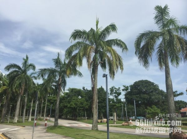 新加坡中小学留学费用