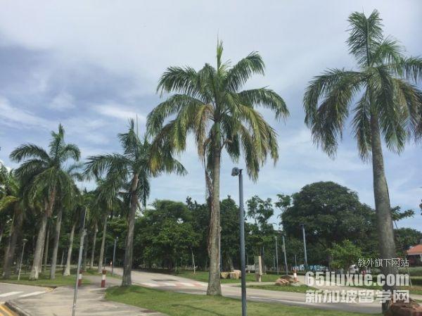 新加坡不看高考成绩的大学